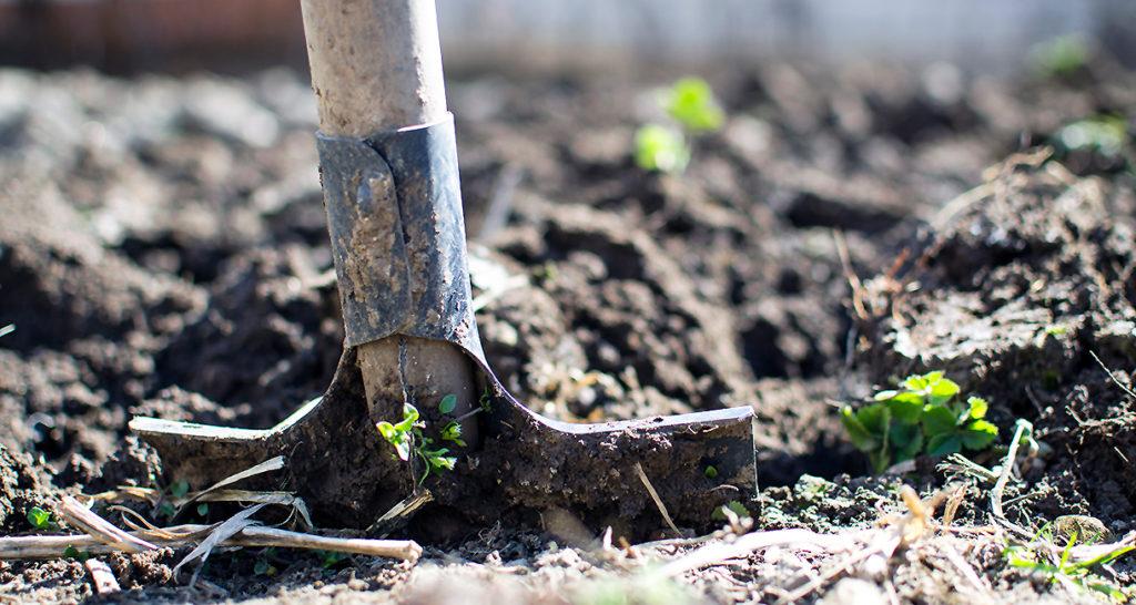 Dig garden_pexels_photo_296230