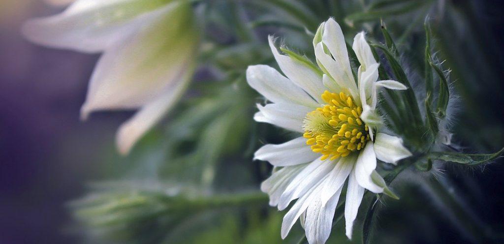flower_4922523_1280_blog